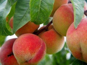 Peach 2632182