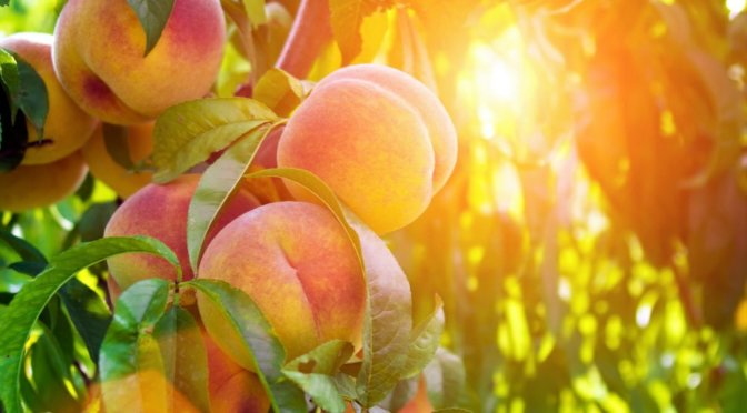20160727 Peaches Shutterstock 321630848