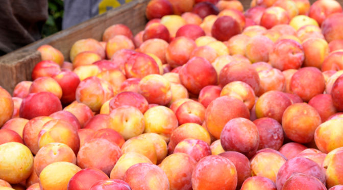 Stone Fruit 7536