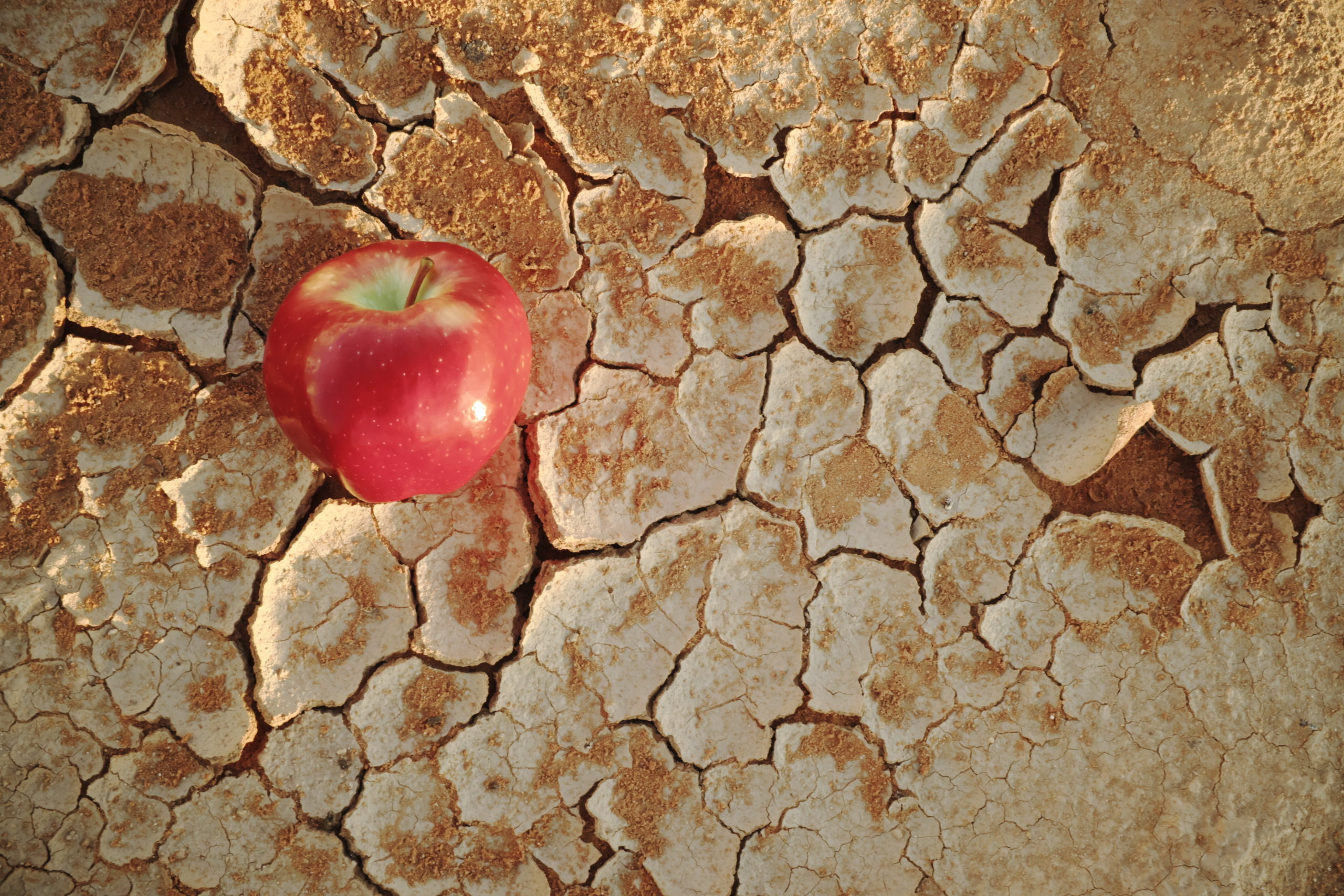 An Apple On A Dry Cracked Desert Soil. Water Shortage, Food Insecurity, Crisis, Hunger And Agriculture Concept.